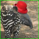 tapir diff dark box