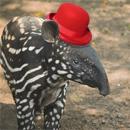 tapir hat dark